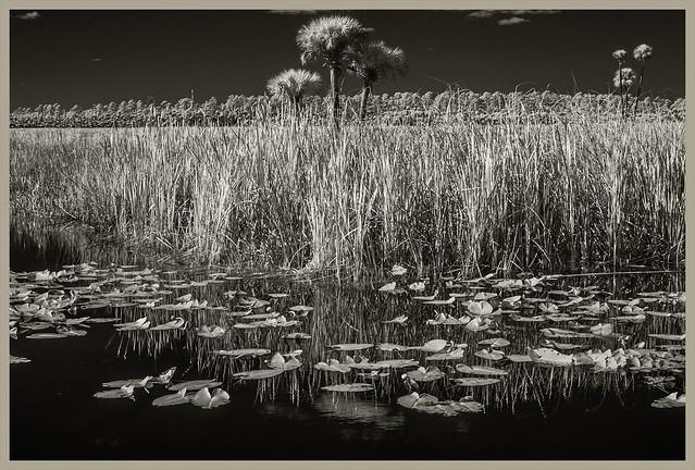 Lake Woodruff IR #14 2020; Palms & Spatterdock