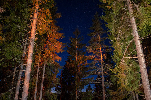 1/365 Forest of Pamporovo
