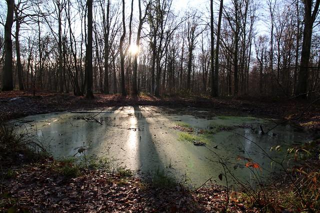 France - Forêt de St Germain en Laye -La mare -The pond