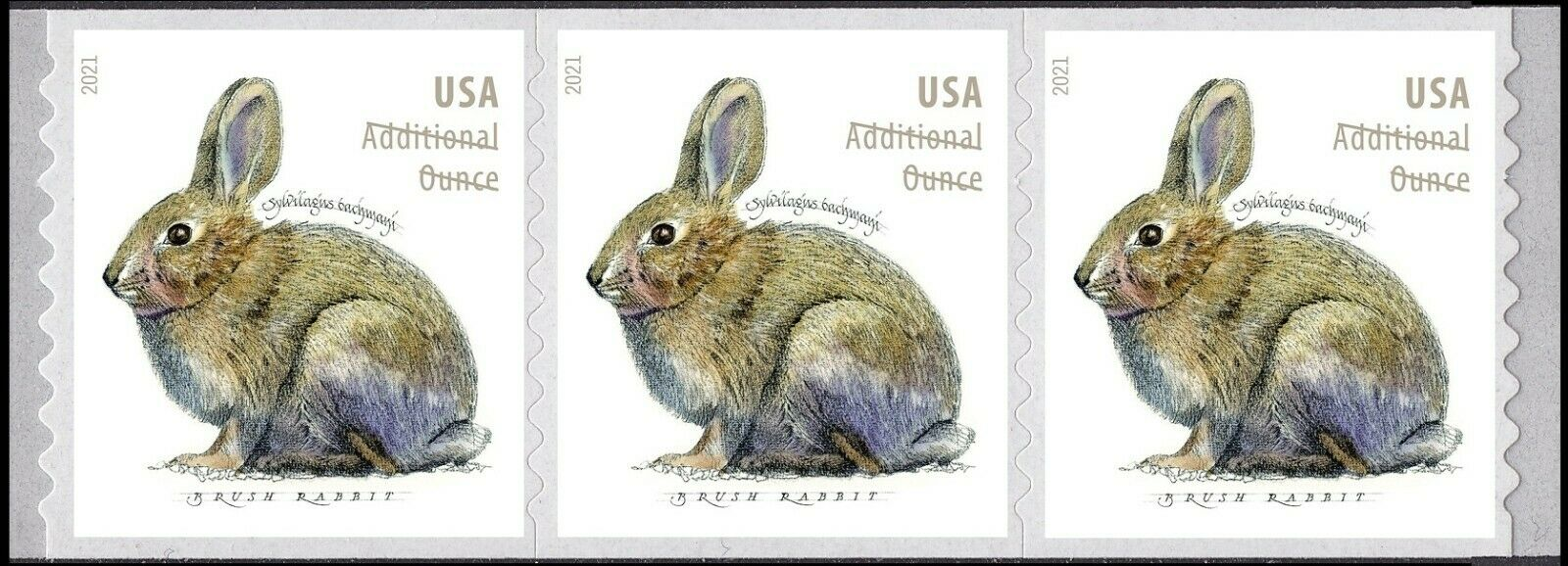 United States: Brush Rabbit, 24 January 2021 (coil strip of 3)