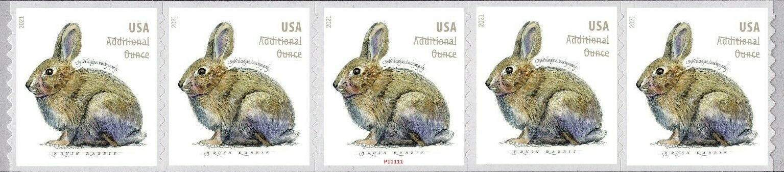 United States: Brush Rabbit, 24 January 2021 (PNC5 #P11111)