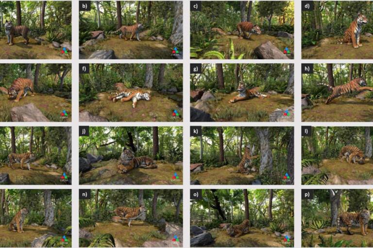 2 以多種3D模擬效果來訓練WildEyes AI系統辨識一隻老虎。這個方法可以讓偵測系統在任何拍攝角度和背景下皆能辨識老虎。圖片來源:RESOLVE
