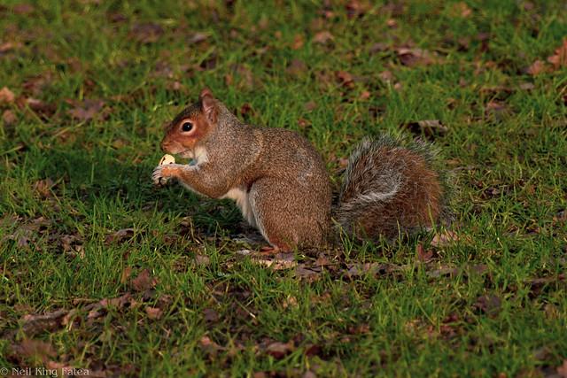 Week 1 - Park Tree Rat