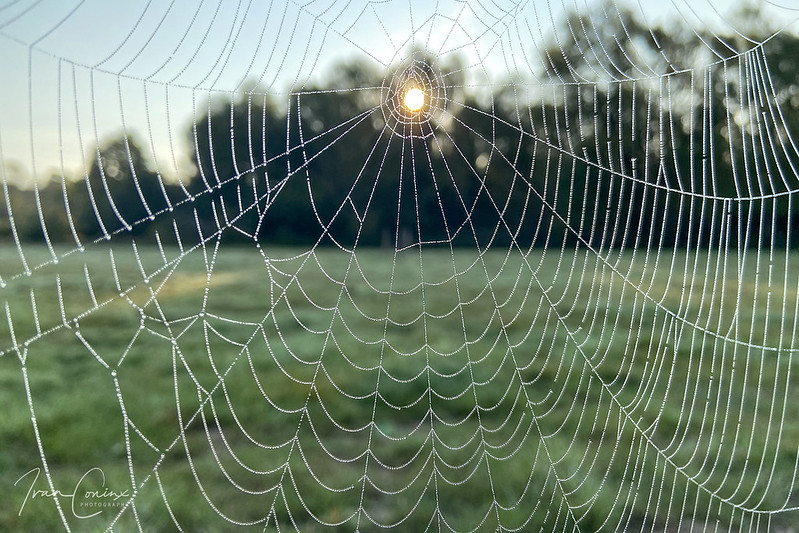 Spider Web – Mechelen – 2020 09 14 – 01 – Copyright © 2020 Ivan Coninx