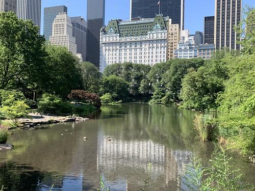 Central Park Summer 2020