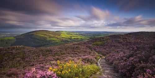 landscape clwyd flintshire moelarthur sunrise heather summer hills wales cymru uk unitedkingdom greatbritain longexposure path nikond7200 sigma1020