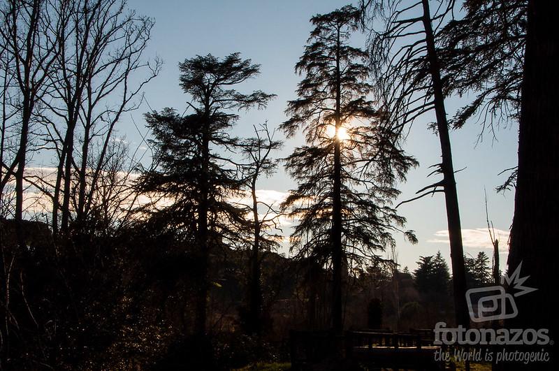 El Forestal de Villaviciosa de Odón