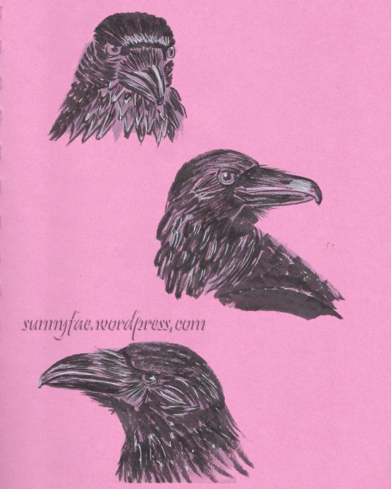 class crow studies