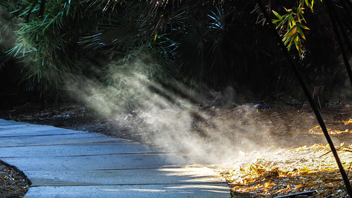 Steamy Morning at the Arboretum !