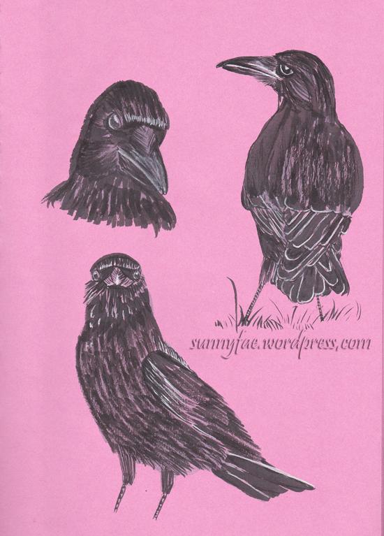 crow studies from my photos