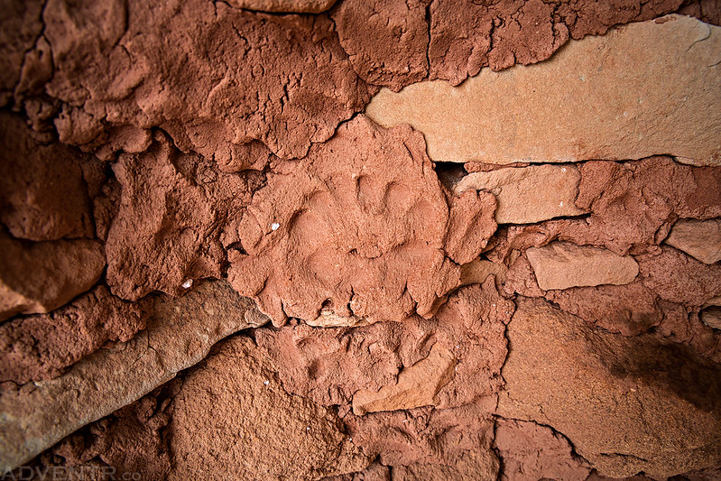 Mortar Paw Print