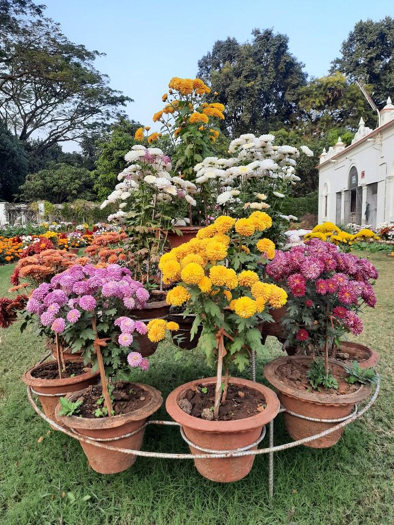 Vidyapith Flowers (10)