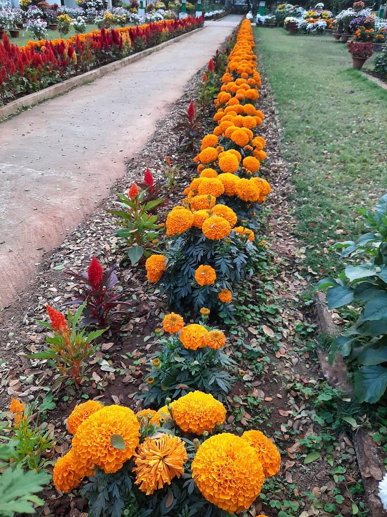 Vidyapith Flowers (18)