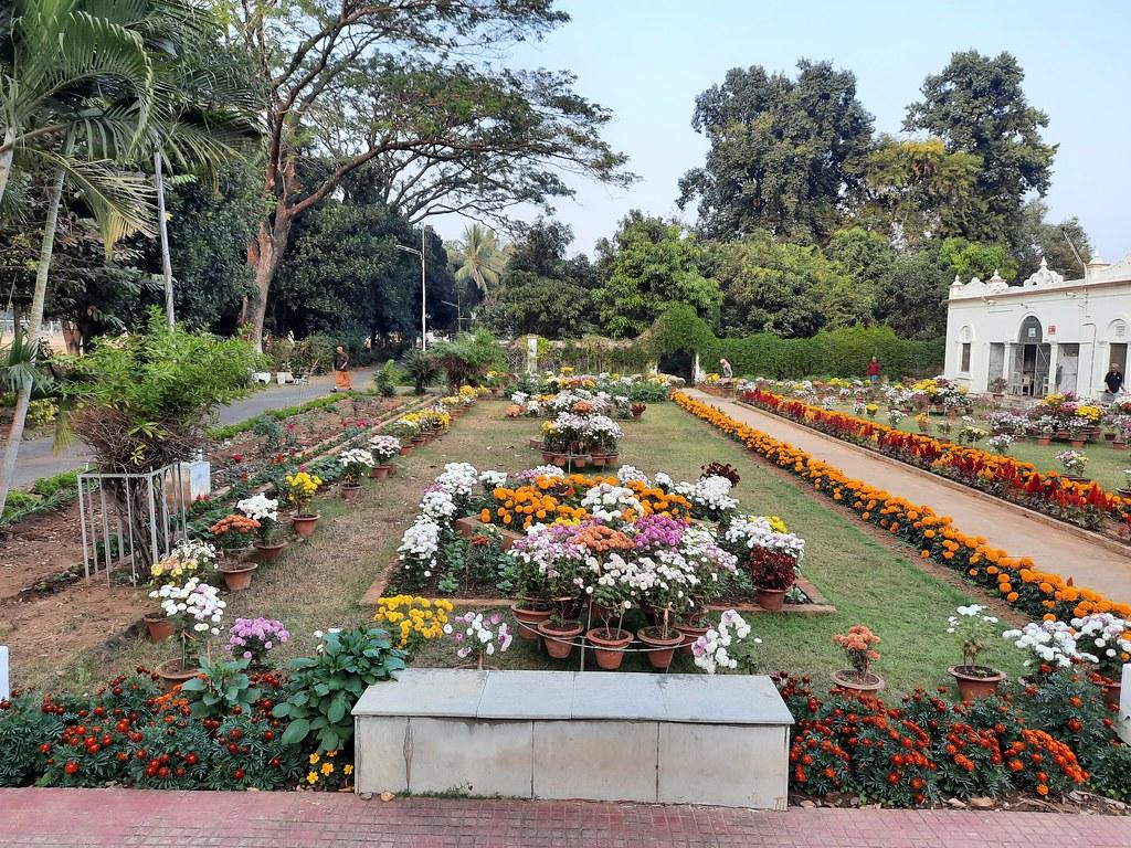 Vidyapith Flowers (1)