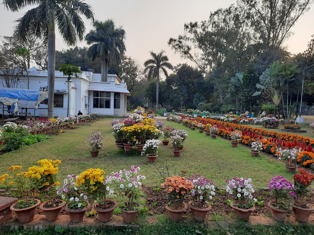 Vidyapith Flowers (16)