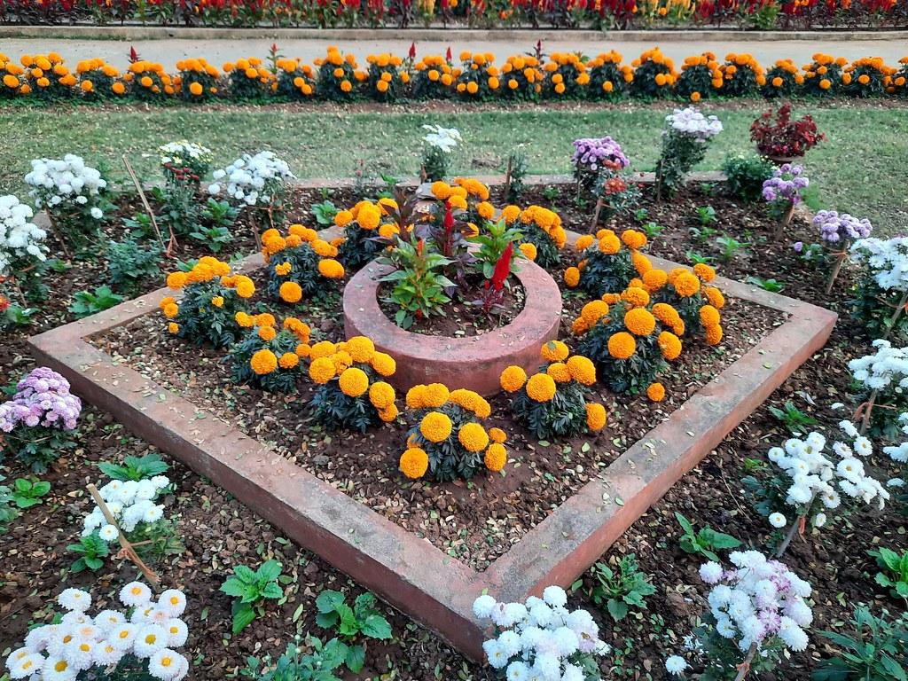 Vidyapith Flowers (24)