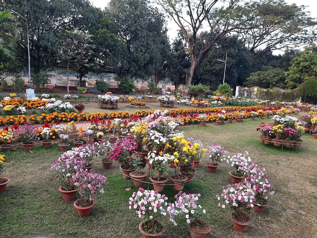 Vidyapith Flowers (30)