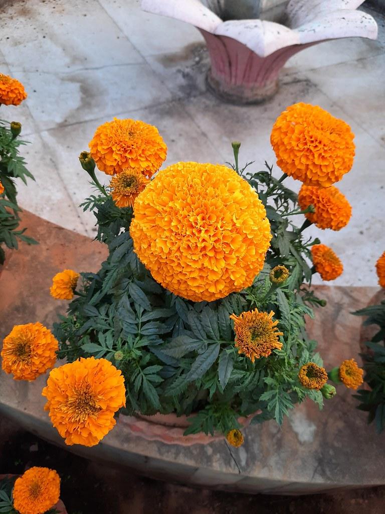 Vidyapith Flowers (46)