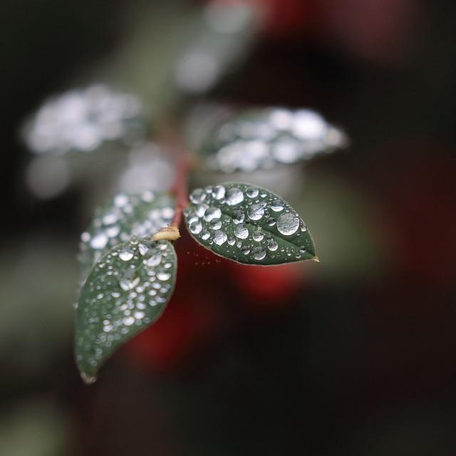 Rainy Day in the Backyard - 1