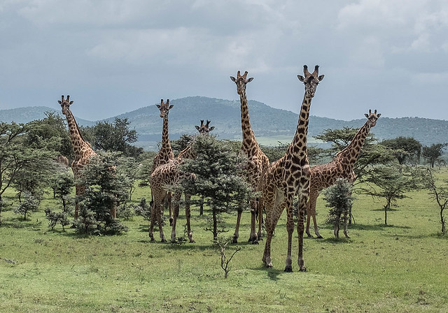 Tanzania Wildlife and Cultural Photo Tour March 2021