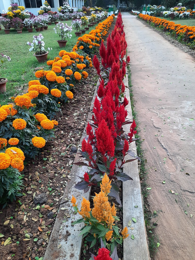 Vidyapith Flowers (19)