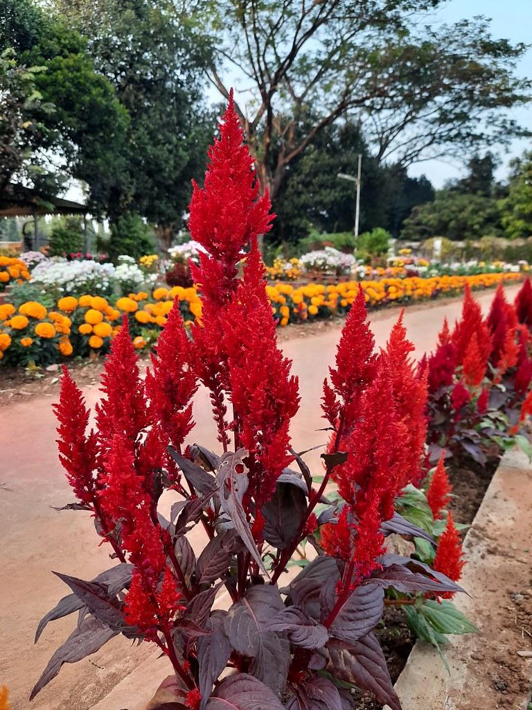 Vidyapith Flowers (5)