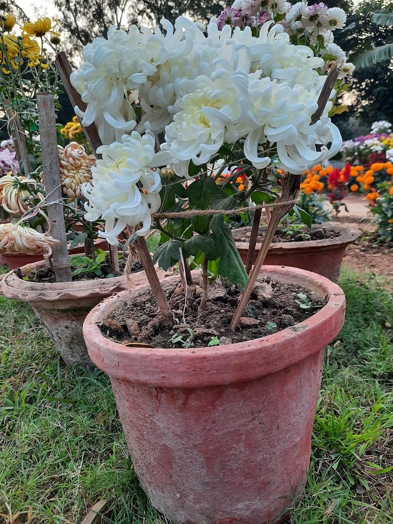 Vidyapith Flowers (7)