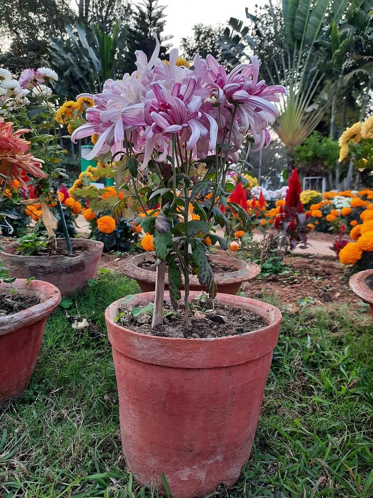 Vidyapith Flowers (8)