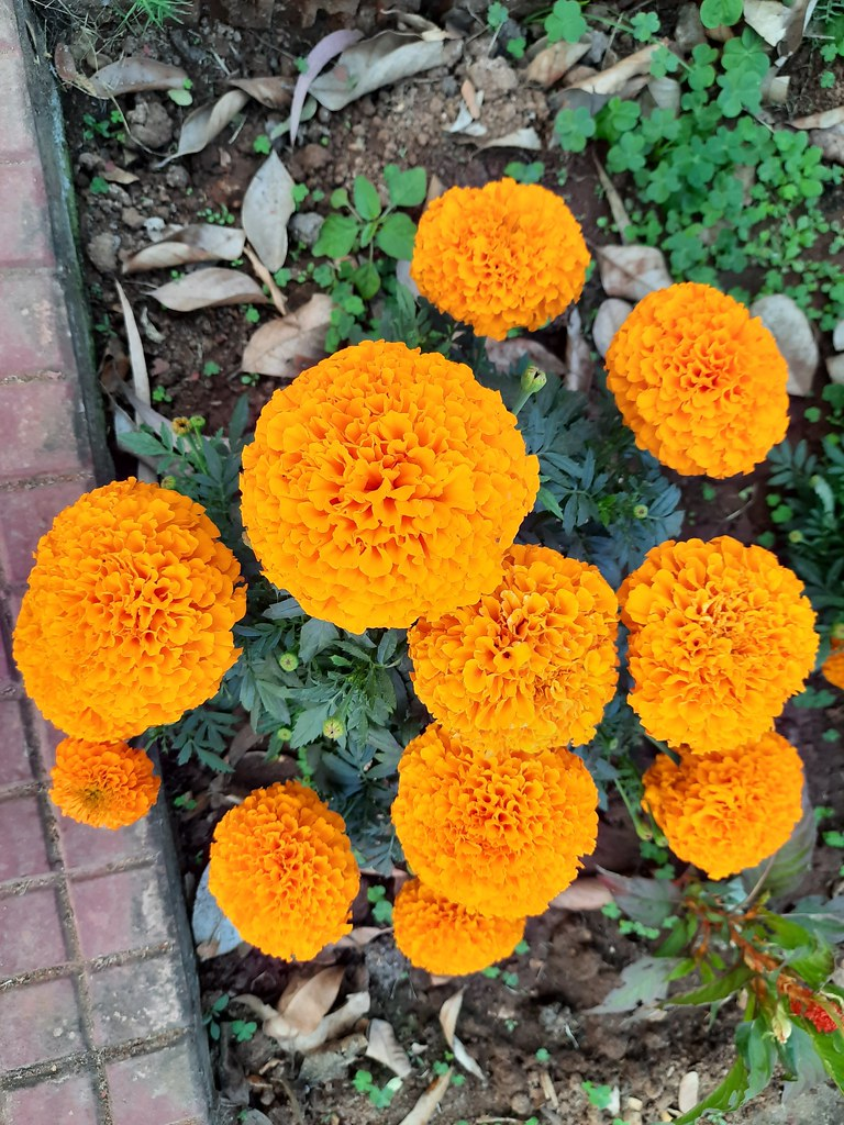 Vidyapith Flowers (3)