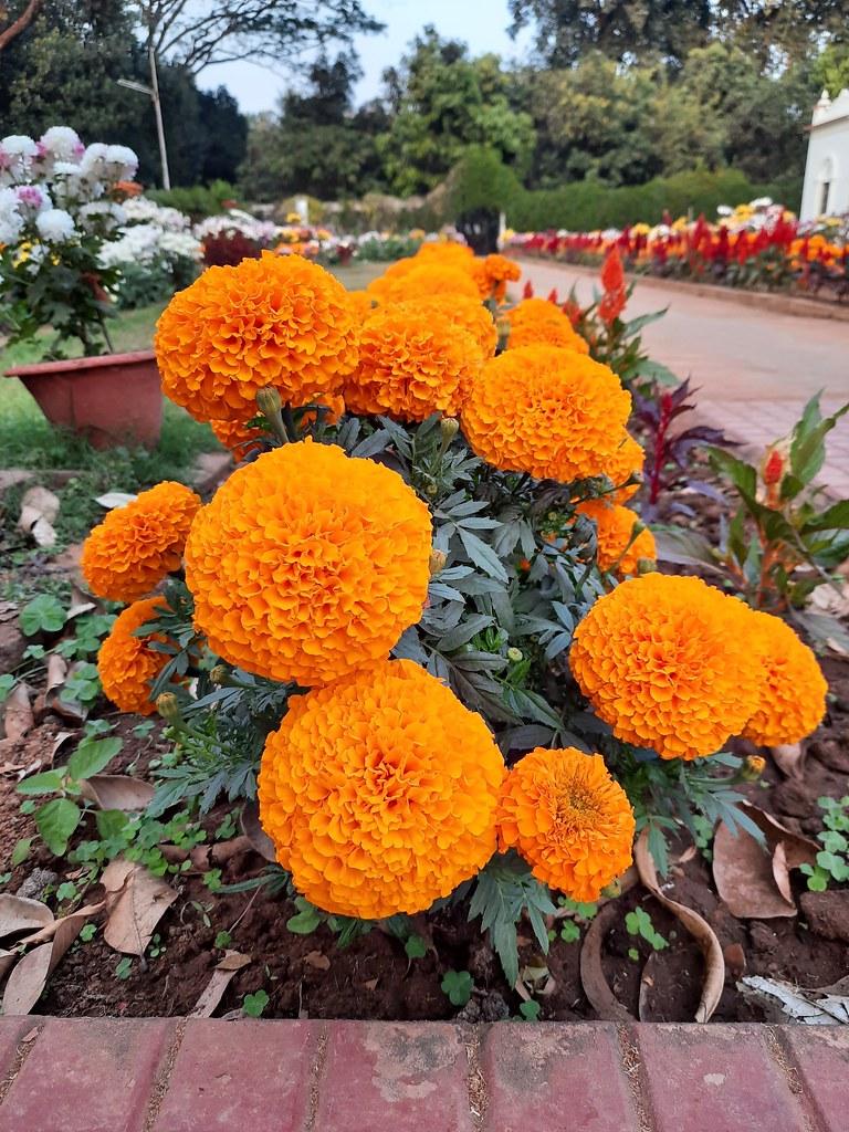 Vidyapith Flowers (4)