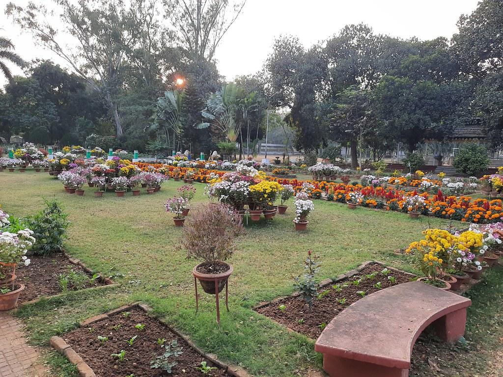 Vidyapith Flowers (15)