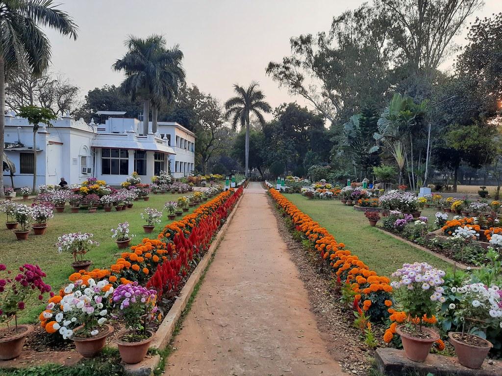 Vidyapith Flowers (17)