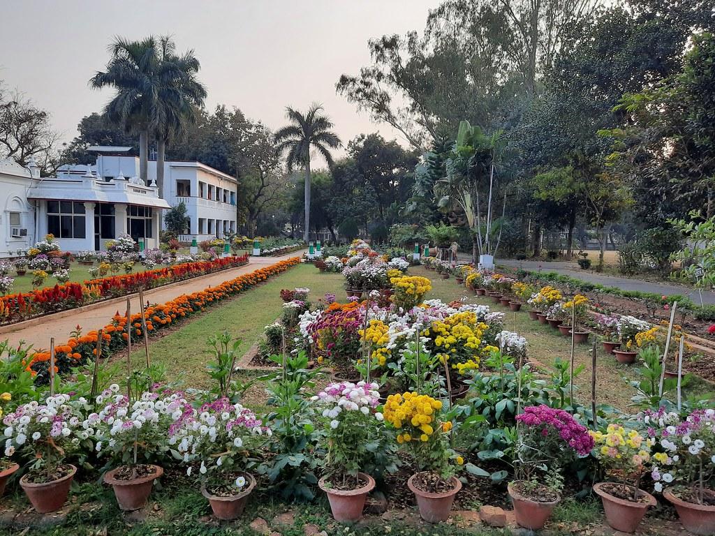 Vidyapith Flowers (20)