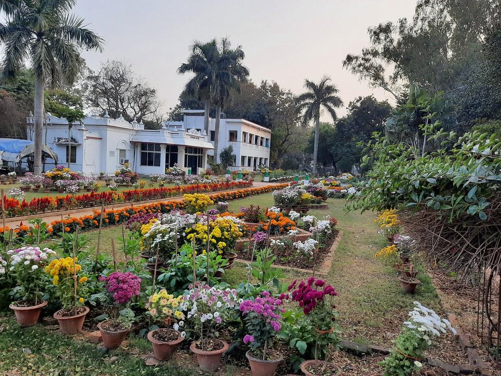 Vidyapith Flowers (21)