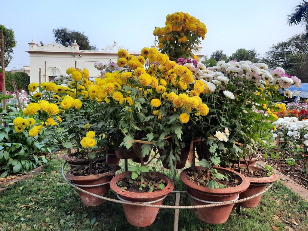 Vidyapith Flowers (22)