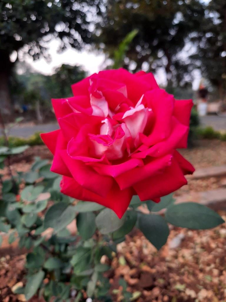 Vidyapith Flowers (23)