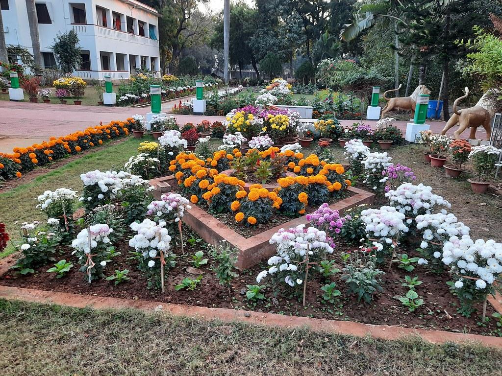 Vidyapith Flowers (26)