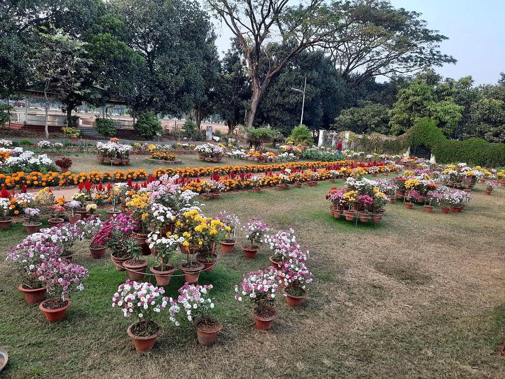 Vidyapith Flowers (29)