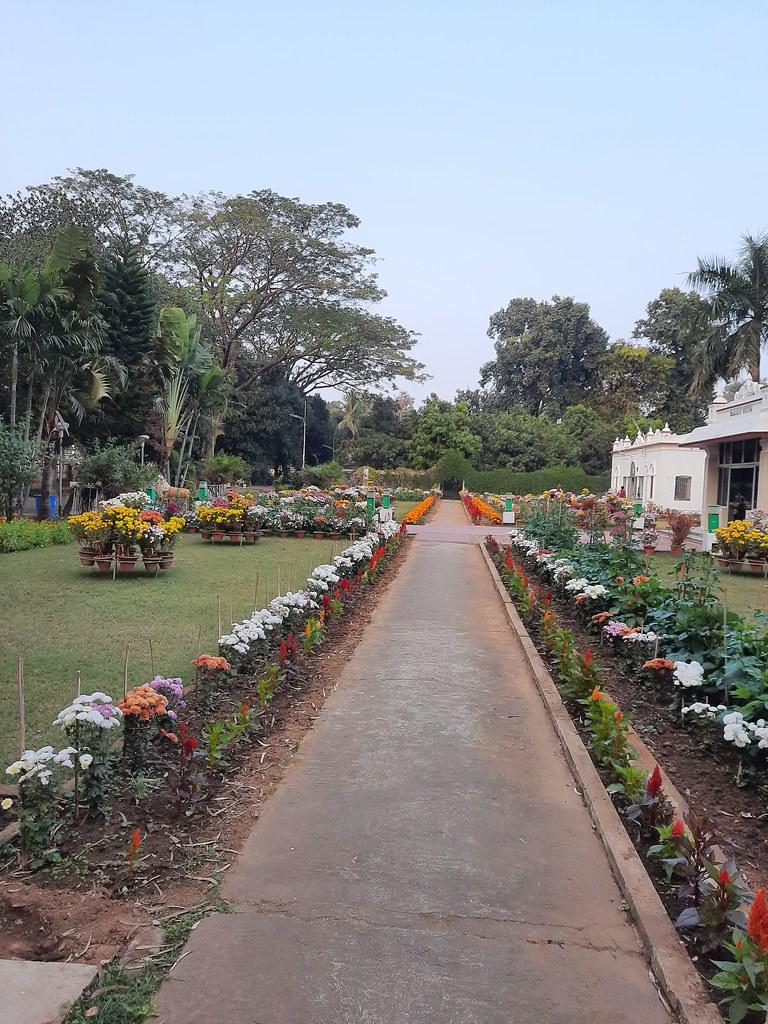 Vidyapith Flowers (31)
