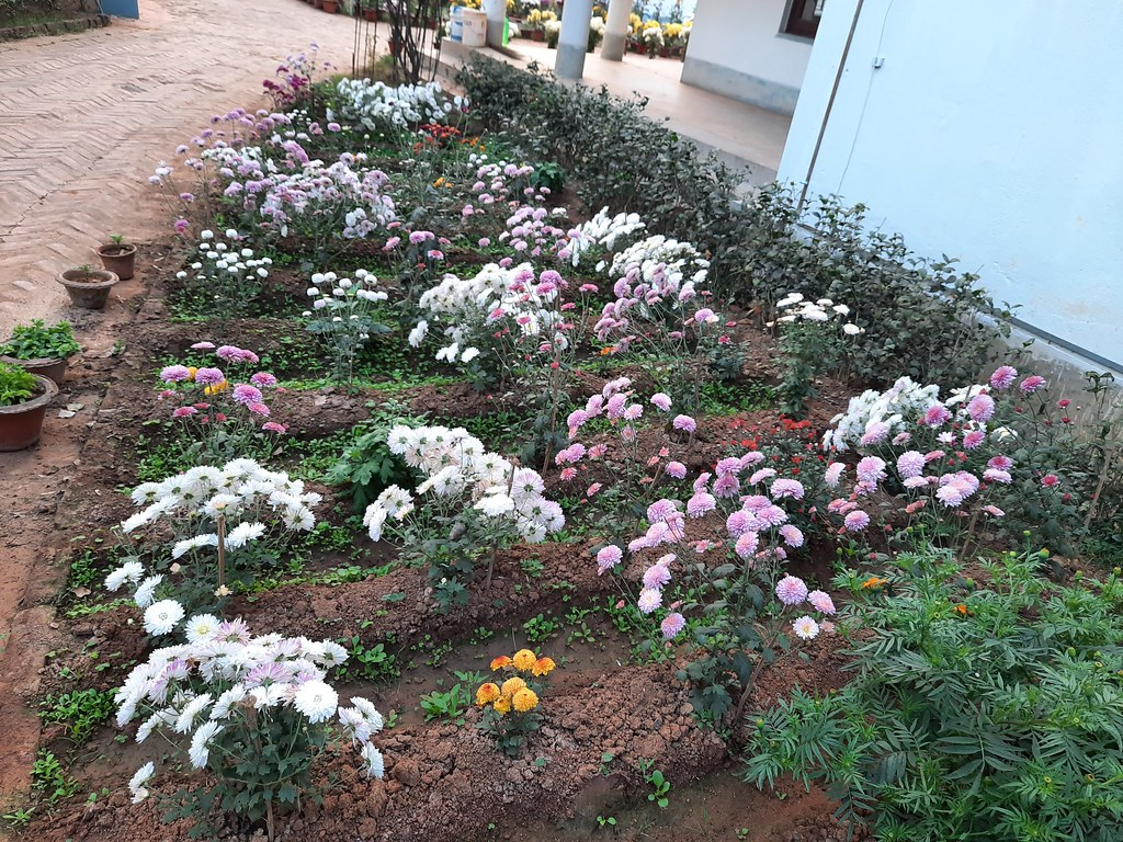 Vidyapith Flowers (49)