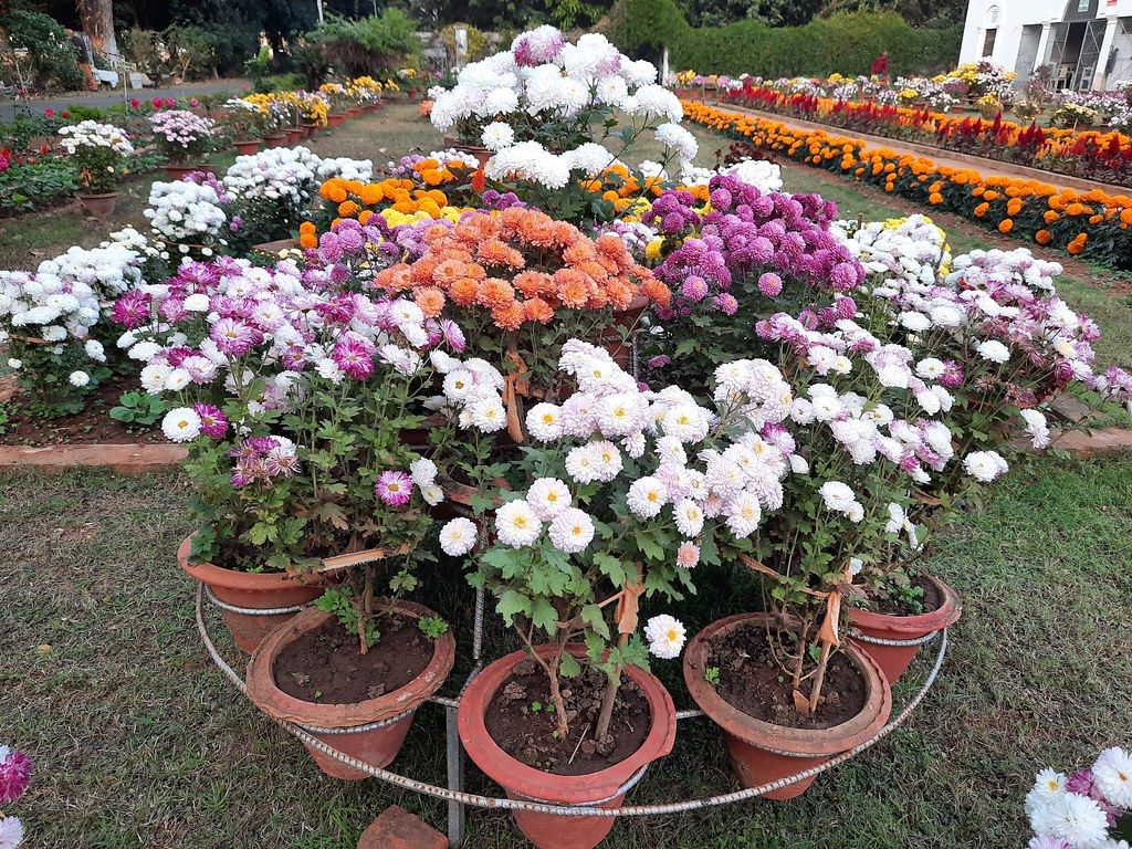 Vidyapith Flowers (2)