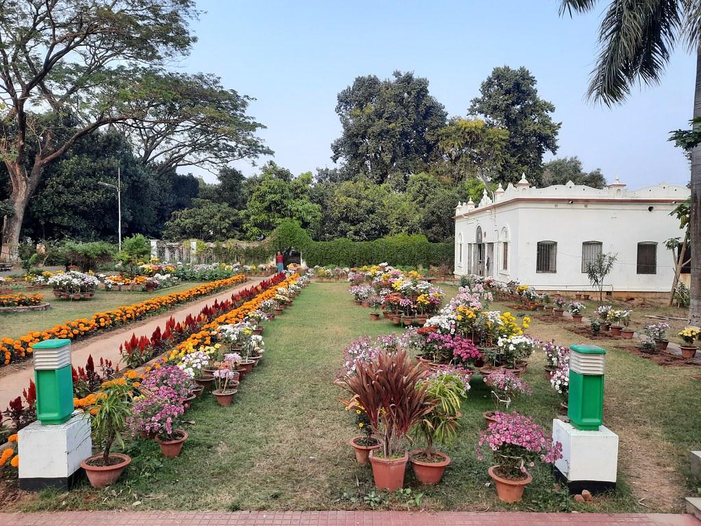 Vidyapith Flowers (6)