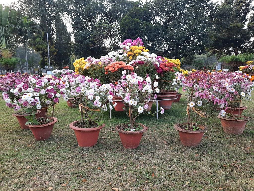 Vidyapith Flowers (11)
