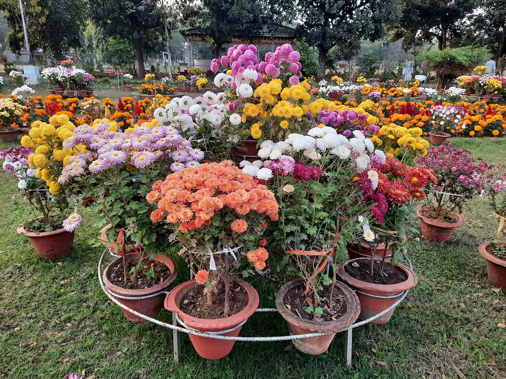 Vidyapith Flowers (12)