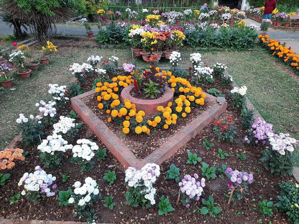 Vidyapith Flowers (25)