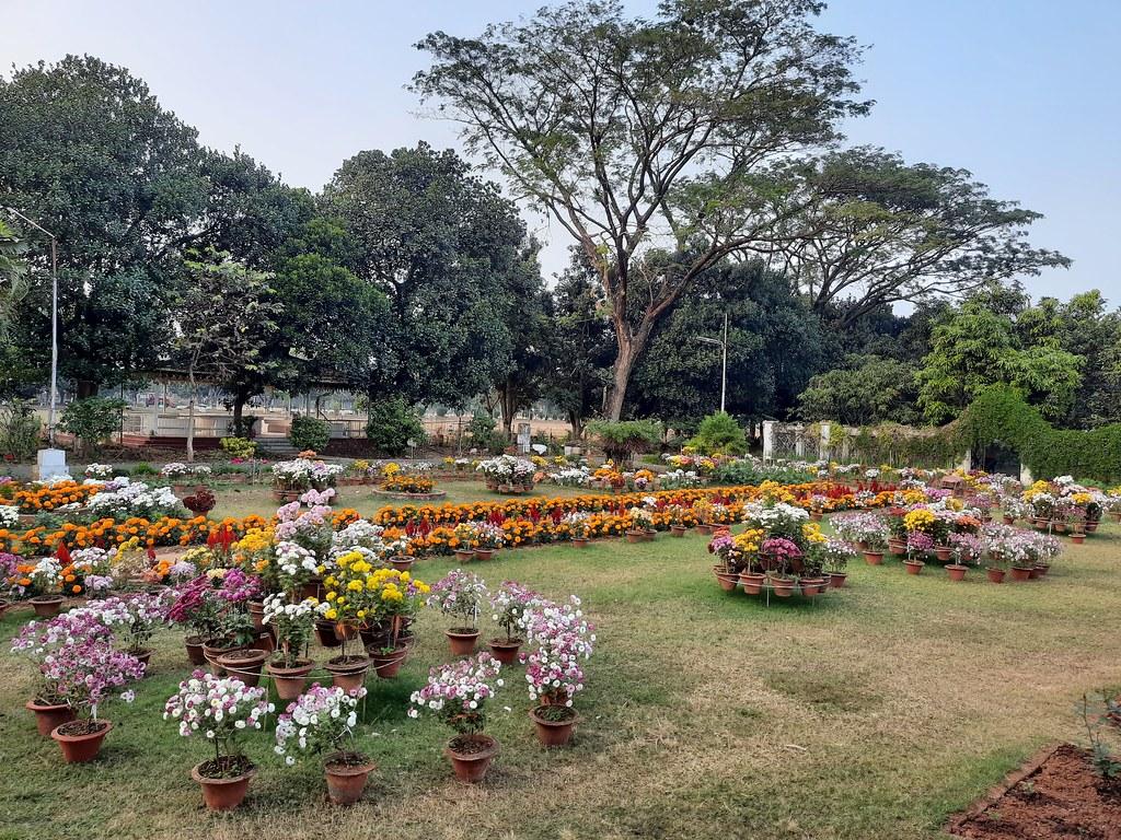 Vidyapith Flowers (28)