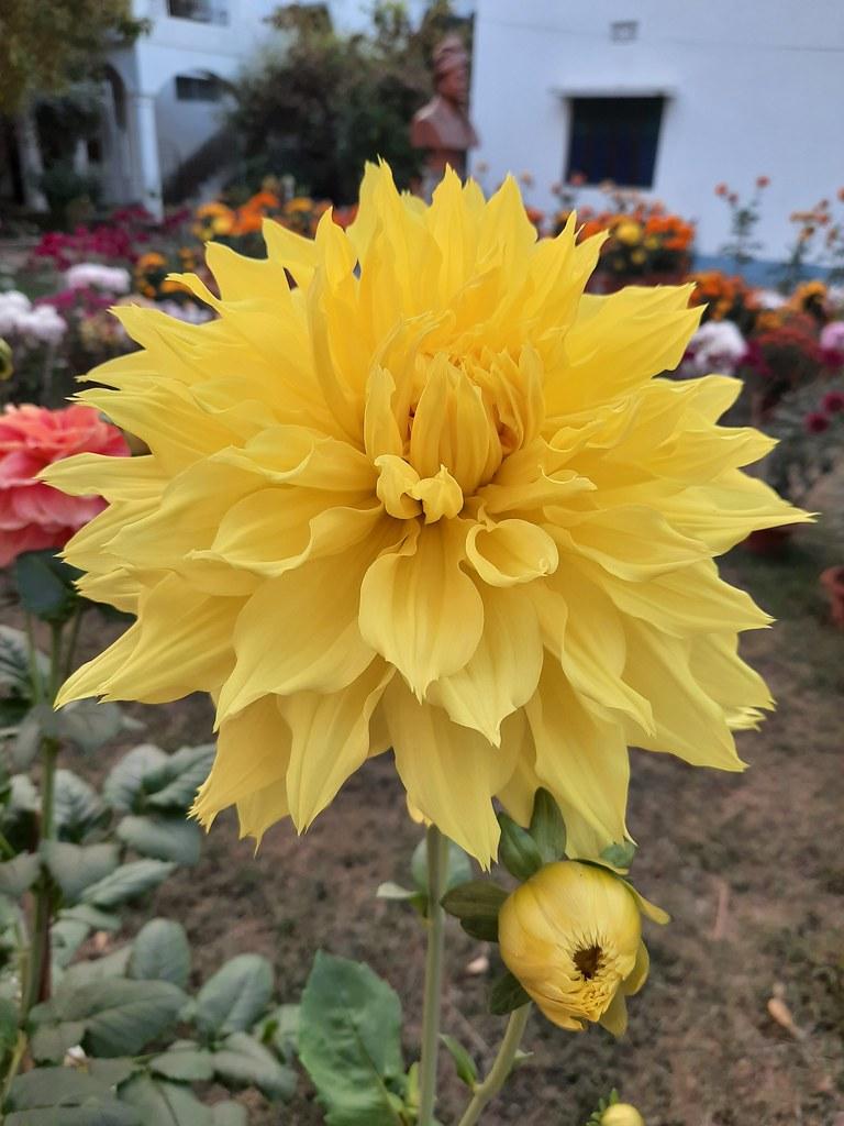 Vidyapith Flowers (39)