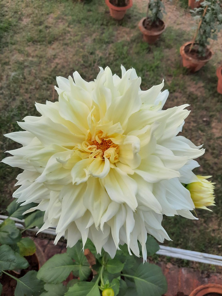 Vidyapith Flowers (40)