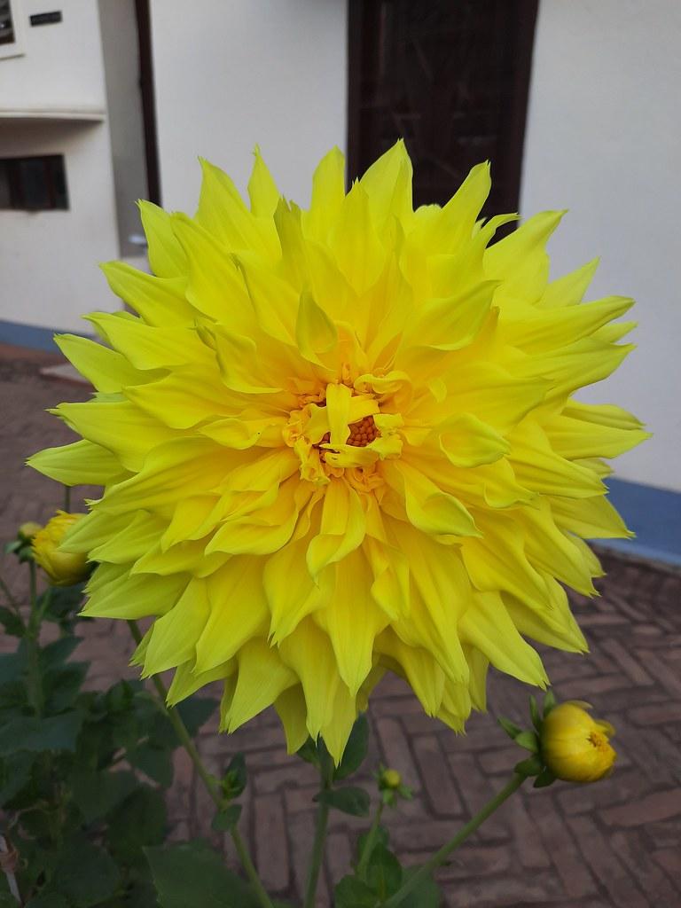 Vidyapith Flowers (41)
