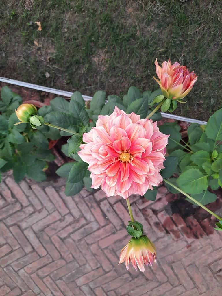 Vidyapith Flowers (42)